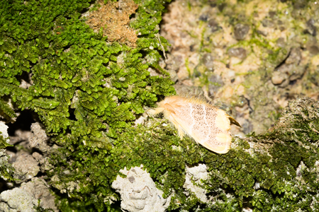 biont: Close up to a moth