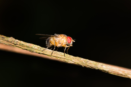 biont: This is a photo of a fly Stock Photo