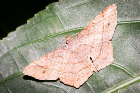 biont: Close up to a moth on a leaf
