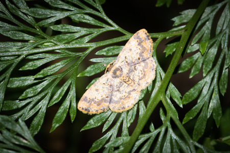 biont: Close up to moth on leaves