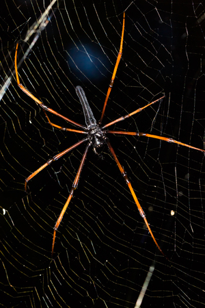 biont: Close up of spider Stock Photo