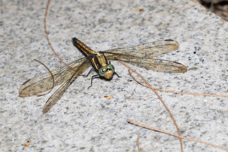 This is a photo of a dragonfly Stock Photo