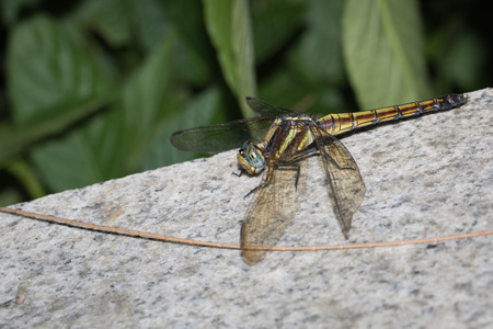 biont: This is a photo of a dragonfly Stock Photo