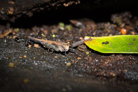 biont: one kind of hopper, was taken in XiaMen botanical garden, China.