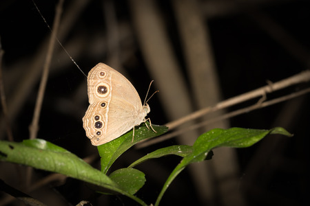 biont: Close up to butterfly on a plant