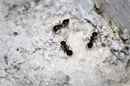 biont: Close up to an ant Stock Photo