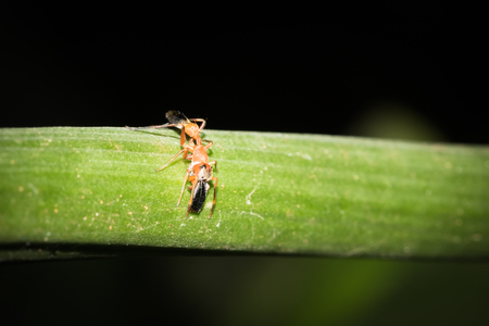 This is a photo of one kind of ant, was taken in XiaMen botanical garden, China.