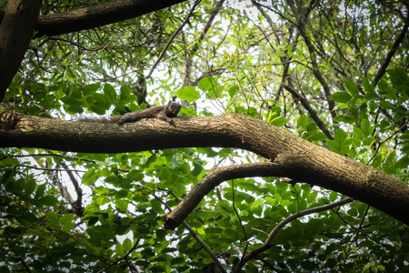biont: This is a photo of one kind of squirrel, was taken in XiaMen botanical garden, China. Stock Photo