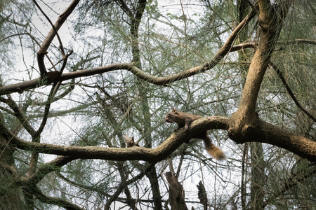 This is a photo of one kind of squirrel, was taken in XiaMen botanical garden, China. Stock Photo