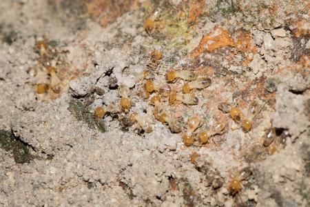 This is a photo some termite, was taken in XiaMen botanical garden, China.