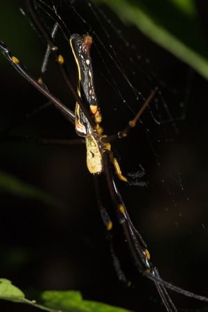 This is a photo of a spider, was taken in XiaMen botanical garden, China.