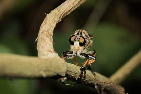 This is a photo of one kind of fly, was taken in XiaMen botanical garden, China. Stock Photo