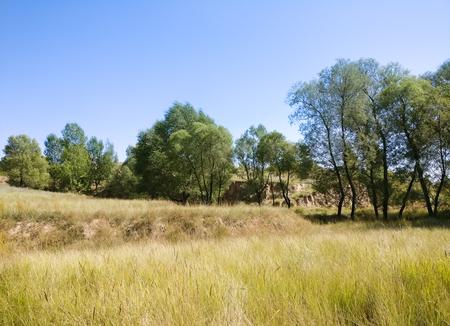 gully: The Plateau Autumn Scene