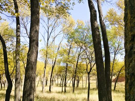 The Plateau Autumn Scene