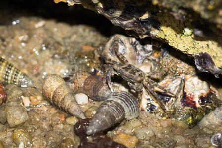 Sea crab close up view