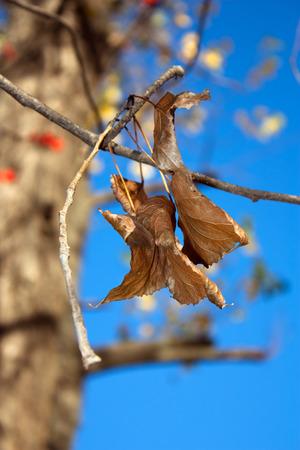 hojas antiguas: las hojas viejas