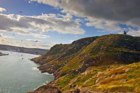 Birds swarming around Signal Hill in Saint Johns Newfoundland, Canada