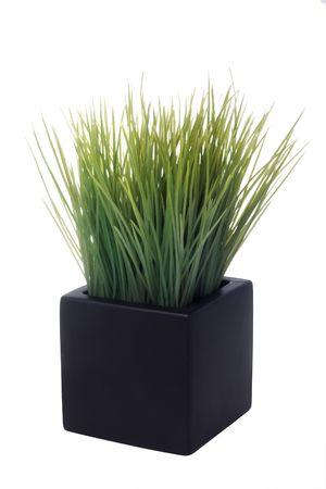 白で隔離される正方形鍋に家の植物 写真素材