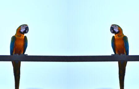 Parrots, macaws, blue sea.
