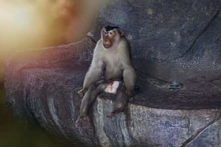Monkey sitting on a cliff Looking for something And are used to the idea