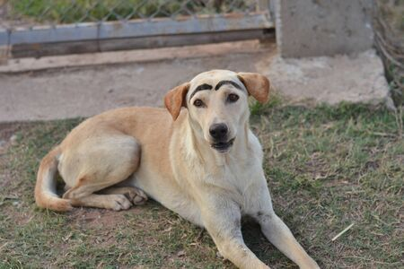 The dog was white eyebrows Stock fotó