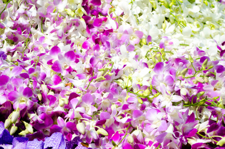 blotched: purple and white orchid background
