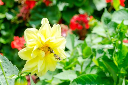 bee on flower: bee on top flower Stock Photo