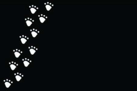 White dog or cat pet footprint tracks on black panorama background. Animal and pet concept. Vettoriali