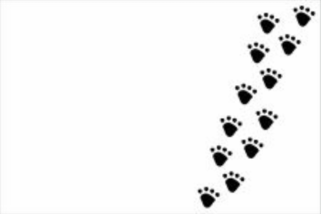Black dog or cat pet footprint tracks on white panorama background. Animal and pet concept.