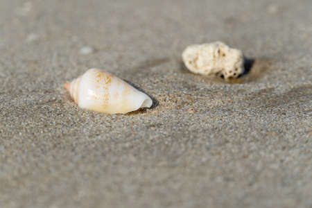 Seashells on the sandy beach on morning sunshine with copy space (selective focus)
