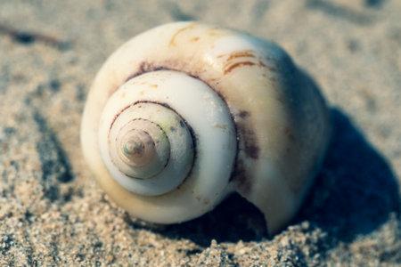 Macro photography Seashell on the sandy beach on morning sunshine (selective focus) aged view 免版税图像