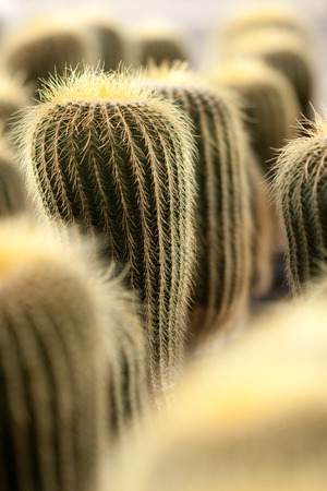 photos of pattern: Cactus Stock Photo
