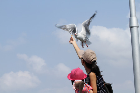 wingspread: Seagull eating food from hand