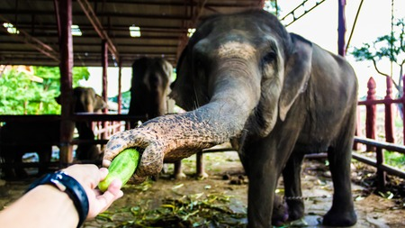 Thaïlande Elephan ferme
