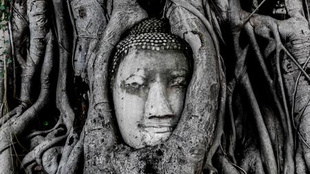 cabeza de buda: La cabeza de Buda Wat Pramahatha Foto de archivo