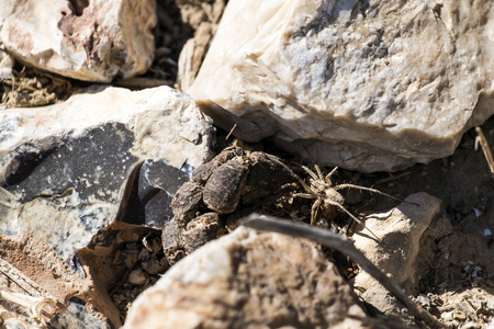 Labyrinth spider hides between stones (Agelena labyrinthica) Banco de Imagens