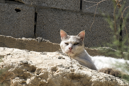 Very cautious and cunning cat Lucifer looks at all from high Stock Photo