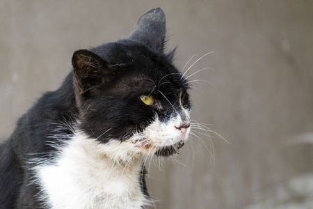 Poor shabby black-and-white cat with gaunt eyes