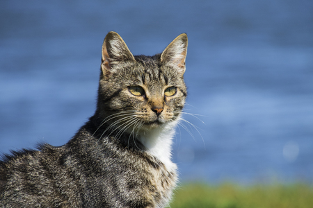 Common tabby cat looking for a target