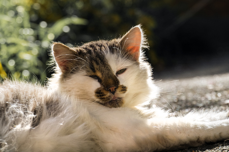 Good-natured cat lays and warms itself in the sun