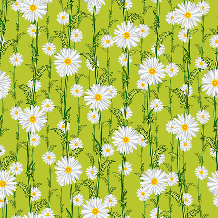 Seamless pattern from field chamomiles in the style of Provence. Summer illustration.