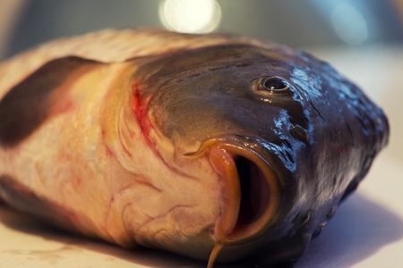 Head of dead fish close-up. Dead carp