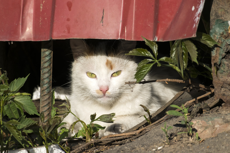White cat looking out of hiding Standard-Bild