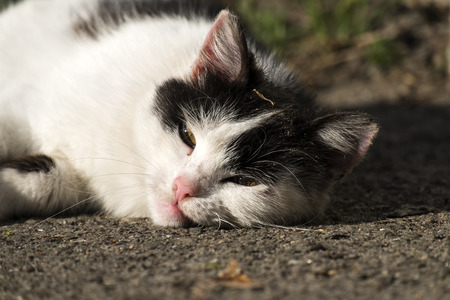 Black and white cat basking in the sun