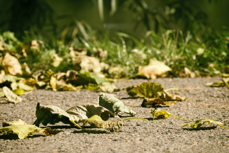 First autumn leaves fell on the asphalt