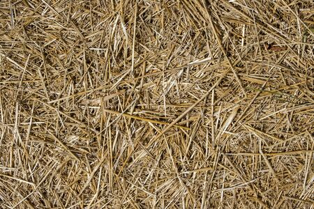 Hay texture. Close-up of dry straw on the ground. Texture of straw