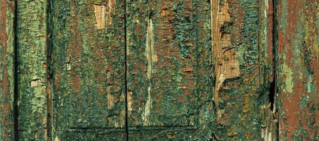 Multilayer paint. Peeling paint on a wooden surface. Texture of the old cracked paint. Cracked paint on a wooden surface