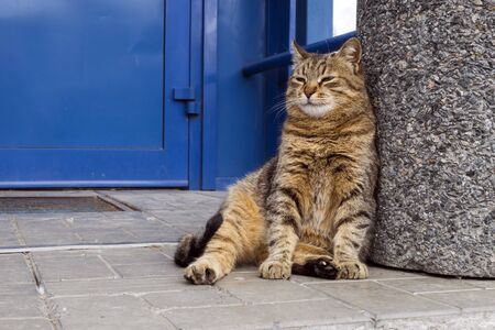 Well fed fat cat sitting near the door of the grocery store Banco de Imagens
