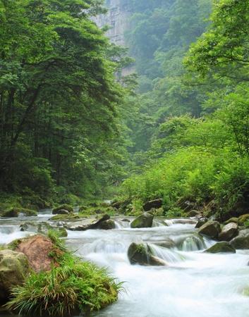 rivulet: Rivulet in the forest in ZhangjiaJie national park