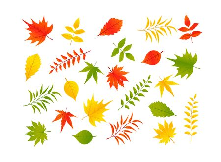 Set of autumn leaves isolated on white background. Vector  イラスト・ベクター素材